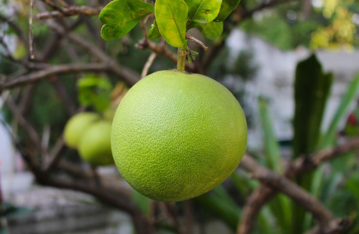 Hair-and-skin-uses-of-pomelo